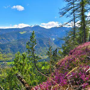 Ausblick im Naturpark mit Erikablüte (c) Karmen Nahberger