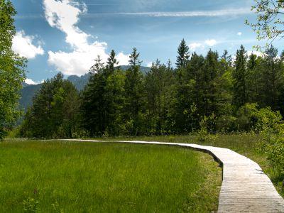 Pfronten Moorwanderweg Holzweg
