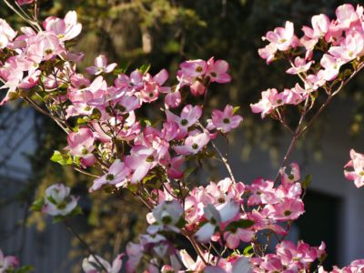 Spring in South Tyrol, Pixabay