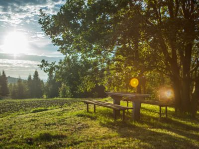 Bench in the meadow, Pixabay